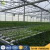 9.6m Multi Span Plastic Film Greenhouse for Hydroponic System