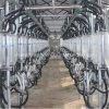 Goat Milking System Parlor for Milking Goat