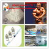 Hot Steroid Powder Testosterone Isocaproate for Muscle-Man