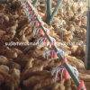 Complete Set Automatic Poultry Equipment for Broiler Production
