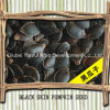 Black Skin Pumpkin Seed with Shell