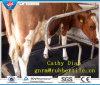 Anti-Fatigue Mat/ Horse Stall Mats/Animal Rubber Mat/Rubber Stable Mat Animal Rubber Mat