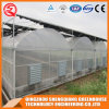 China Single-Span PE Film Grfeenhouse with Ventilation Sysytem
