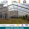 Clear Roof Agriculture Tent, Greenhouse Tent for Sale