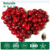Cranberry Extract 50% Proanthocyanidins