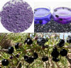 100% Natural Wild Black Wolfberry/Chinese Wolfberry Granular Beverage/Health Food/Whitening/King of Anthocyanins/Anticancer/Anti-Aging