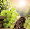 GMP Certified Fatory Supply OPC Proanthocyanidins Procyanidin Grape Seed Extract