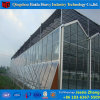 Double Layer Glass Agricultural Green House for Tomato