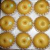 Good Quality Fresh Chinese Fengshui Pear