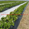 Agriculture Weed Control, Fleece Protective Proof Cover Fabric Roll
