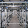 Automatic Sheep Milking System Herringbone Milking Parlor