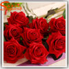 Professional Manufacturer Cheap Artificial Red Rose Flower China