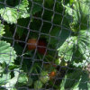 Light Weight Anti Bird Netting (Protect Grape Plants, 100% HDPE)