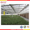 Ten Years Guarantee Hollow Polycarbonate Sheet for Greenhouse Roofing (YM-PC-034)