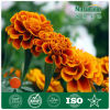 Pure Marigold Extract for Animal Feed