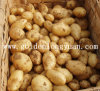 Fresh Potato Good Quality and Competitive Price