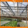 Auto environment Control Glass Greenhouse for Seeding