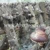 Dried Smooth Shiitake Mushroom