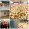 Full Set Poultry Equipment with Prefab Poultry Shed for One Stop Service