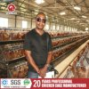 Broiler Chicks Rate Chicken Cage for Poultry House Design