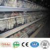 Layer Cages Automatic System Chicken House Eggs Collection System