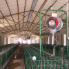 Steel Structure Prefabricated Poultry Farms