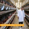 China manufactures direct sale automatic poultry cages for egg chicken