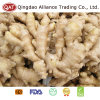 Top Quality Fresh Chinese Fat Ginger