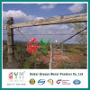 Double Strand Barbed Wire/ Cattle Encloure Barbed Wire Fence