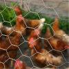 Anping Manufacture Chicken Coop Galvanized Hexagonal Wire Mesh/Chicken Wire Mesh Netting
