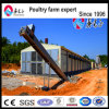 Broiler Ground Raising Equipment with Steel House