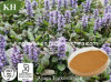 Pure Natural Ajuga Turkestanica Extract Turkesterone