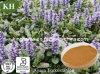 Pure Natural Ajuga Turkestanica Extract Turkesterone