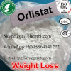 99% Purity Pharmaceutical Raw Material Orlistat for Fat Loss