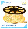 ETL Listed IP65 120V LED Light Strip for Christmas Decoration