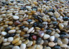 Colorful Natural River Cobble & Pebble Stone for Landscape / Garden Paving