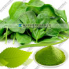 Natural Dehydrated 80-200 Mesh Spinach Powder