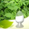 High Quality Natural Ligustrazine Extract Hydrochloride Ligustrazine