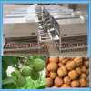 Automatic Walnut Peeling Machine with Ce Approval