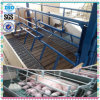 Powder Coating Sow Farrowing Crate