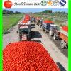 Tomato Paste, Bulk Tomato Paste, Canned Tomto Paste, Ketchup, Tomato Sauce, Tomao Paste Supplier in China