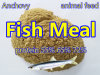 Fish Meal From Sea Fish with Best Quality