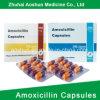 Capsule Antibiotic Carton Packaging