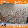 Marine Plex Plywood / Marineplex Plywood (NFP-BL1001)