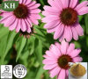 100% Natural Echinacea Purpurea Extract (high quality, fairest price)
