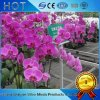 Hydroponics System Activity Seedbed for Modern Vegetable Glass Greenhouses