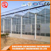 Multi Span Venlo Vegetable/ Garden Glass Greenhouse