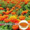 Marigold Extract 5% Lutein Beadlets for Tablet
