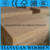 Cheap 18mm Poplar / Pine / Paulownia / Falcata Core Blockboard