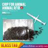 Animal RFID Microchip for Animal Identification/Tracking